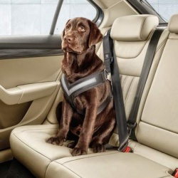 Genuine Skoda Dog Safety Belt/Harness - Size L