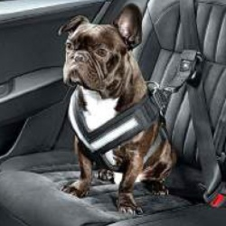 Genuine Skoda Dog Safety Belt/Harness - Size S
